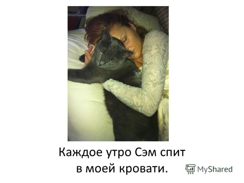 Каждое утро Сэм спит в моей кровати.