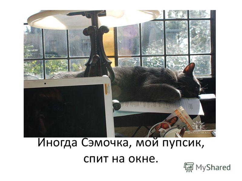Иногда Сэмочка, мой пупсик, спит на окне.