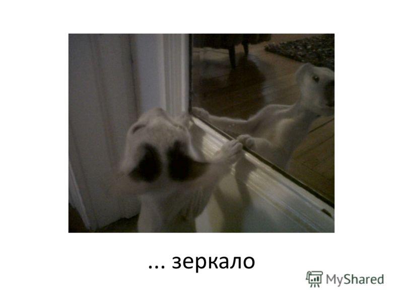 ... зеркало