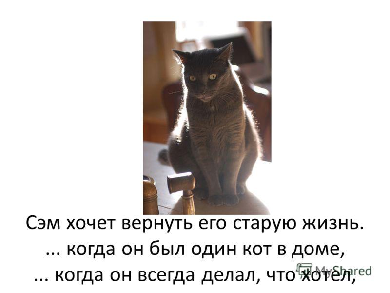 Сэм хочет вернуть его старую жизнь.... когда он был один кот в доме,... когда он всегда делал, что хотел,