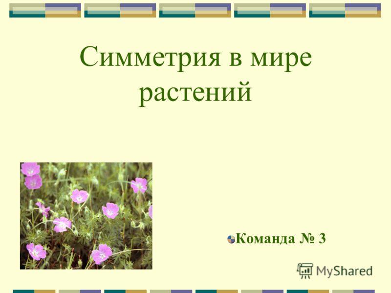 Симметрия в мире растений Команда 3