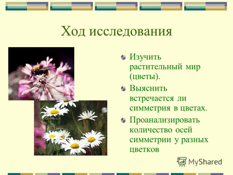 Ход исследования Изучить растительный мир (цветы). Выяснить встречается ли симметрия в цветах. Проанализировать количество осей симметрии у разных цветков