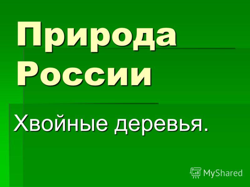 Природа России Хвойные деревья.