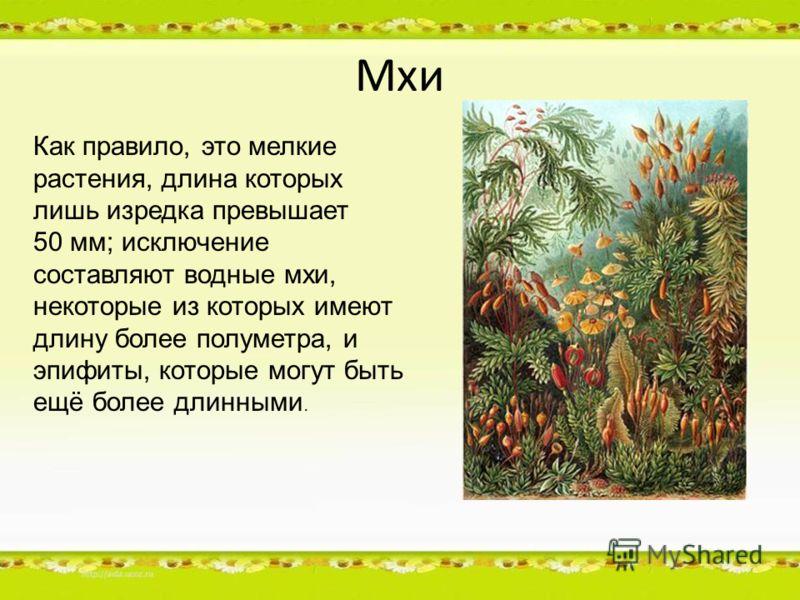 Мхи Как правило, это мелкие растения, длина которых лишь изредка превышает 50 мм; исключение составляют водные мхи, некоторые из которых имеют длину более полуметра, и эпифиты, которые могут быть ещё более длинными.