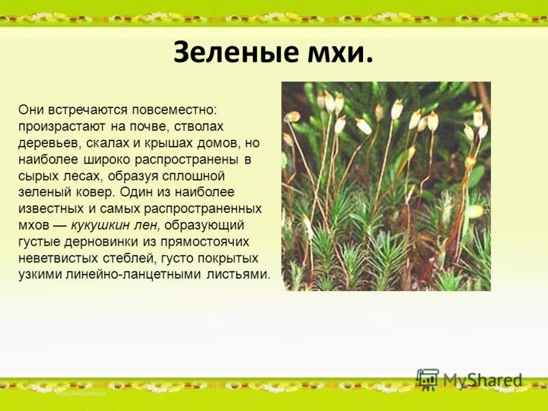 Зеленые мхи. Они встречаются повсеместно: произрастают на почве, стволах деревьев, скалах и крышах домов, но наиболее широко распространены в сырых лесах, образуя сплошной зеленый ковер. Один из наиболее известных и самых распространенных мхов кукушк