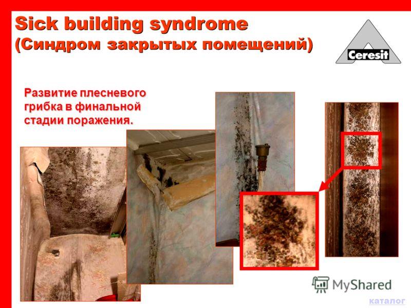 Развитие плесневого грибка в финальной стадии поражения. Sick building syndrome (Синдром закрытых помещений)