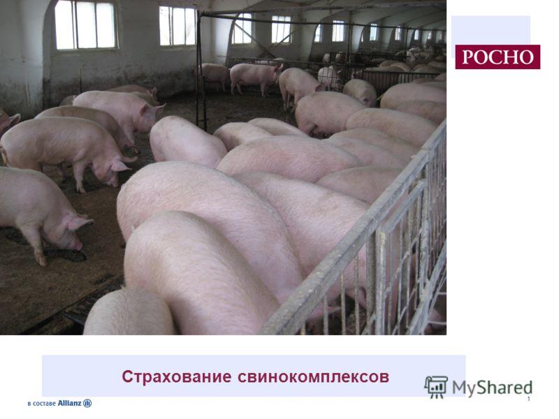 1 Страхование свинокомплексов