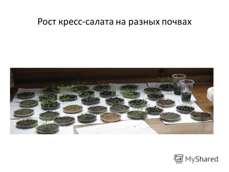 Рост кресс-салата на разных почвах