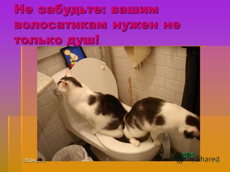23.04.200711 Не забудьте: вашим волосатикам нужен не только душ!