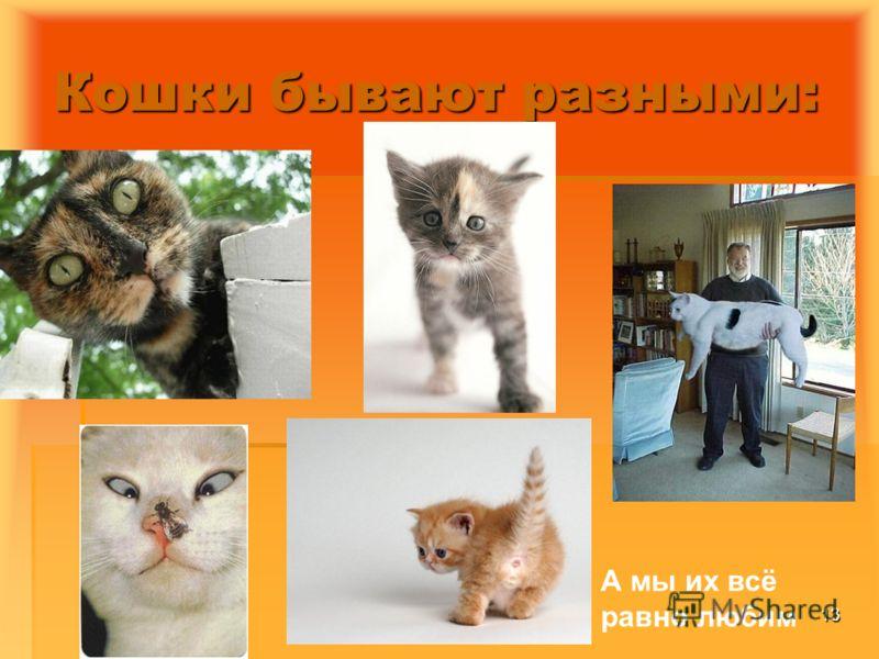 23.04.200713 Кошки бывают разными: А мы их всё равно любим