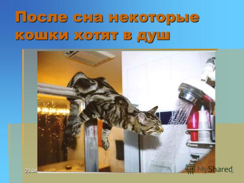 23.04.20078 После сна некоторые кошки хотят в душ