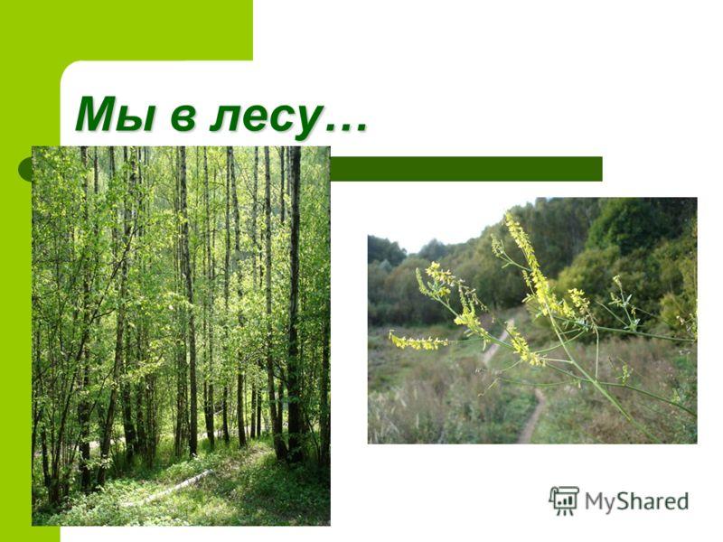 Мы в лесу…