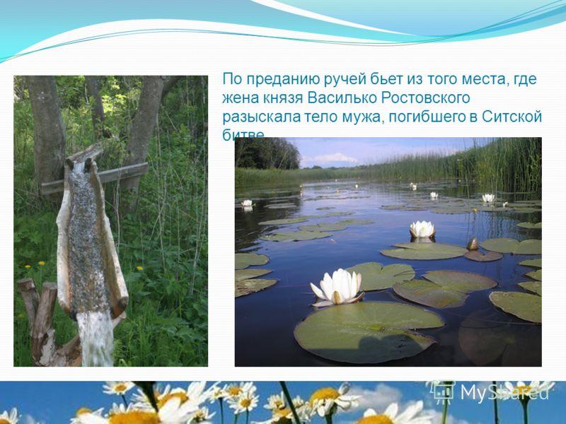 По преданию ручей бьет из того места, где жена князя Василько Ростовского разыскала тело мужа, погибшего в Ситской битве.