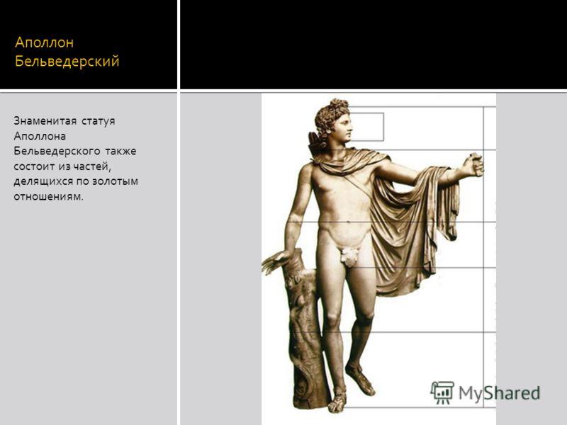 Аполлон Бельведерский Знаменитая статуя Аполлона Бельведерского также состоит из частей, делящихся по золотым отношениям.