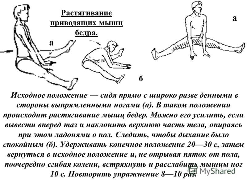 Исходное положение сидя прямо с широко разве денными в стороны выпрямленными ногами (а). В таком положении происходит растягивание мышц бедер. Можно его усилить, если вывести вперед таз и наклонить верхнюю часть тела, опираясь при этом ладонями о пол