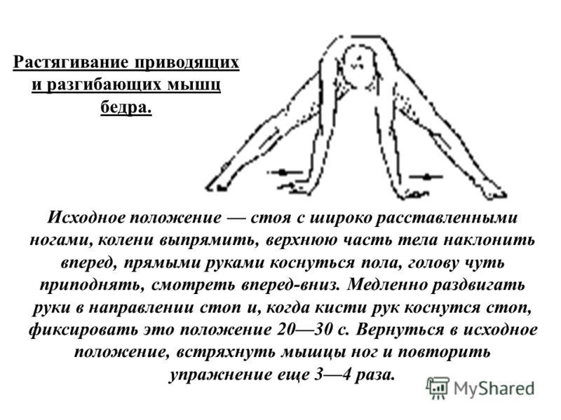Растягивание приводящих и разгибающих мышц бедра. Исходное положение стоя с широко расставленными ногами, колени выпрямить, верхнюю часть тела наклонить вперед, прямыми руками коснуться пола, голову чуть приподнять, смотреть вперед-вниз. Медленно раз