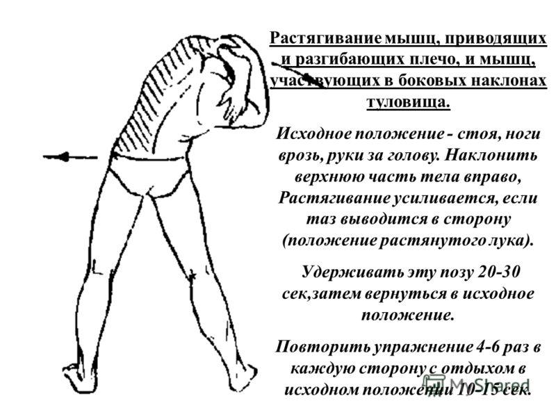 Растягивание мышц, приводящих и разгибающих плечо, и мышц, участвующих в боковых наклонах туловища. Исходное положение - стоя, ноги врозь, руки за голову. Наклонить верхнюю часть тела вправо, Растягивание усиливается, если таз выводится в сторону (по