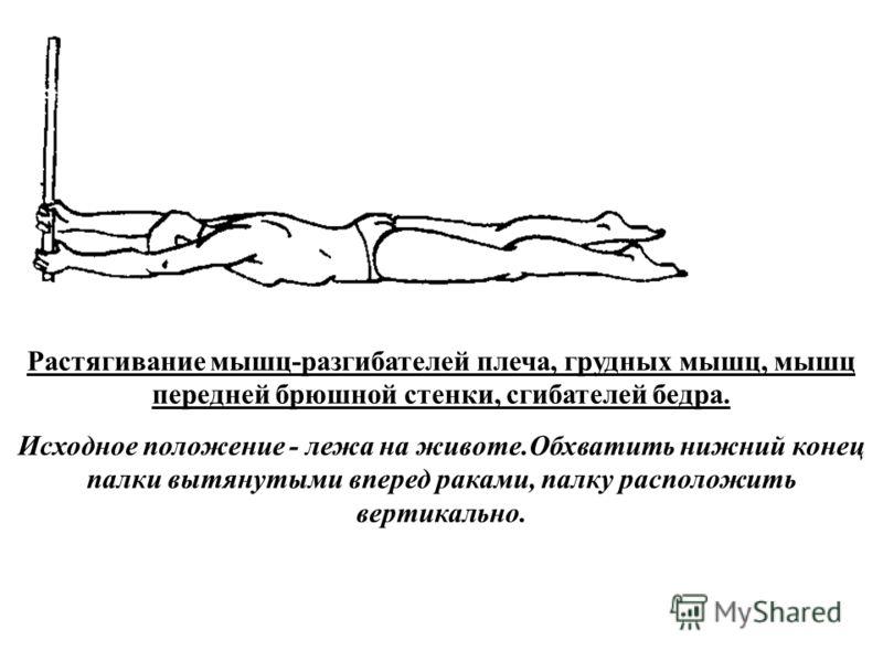 Растягивание мышц-разгибателей плеча, грудных мышц, мышц передней брюшной стенки, сгибателей бедра. Исходное положение - лежа на животе.Обхватить нижний конец палки вытянутыми вперед раками, палку расположить вертикально.