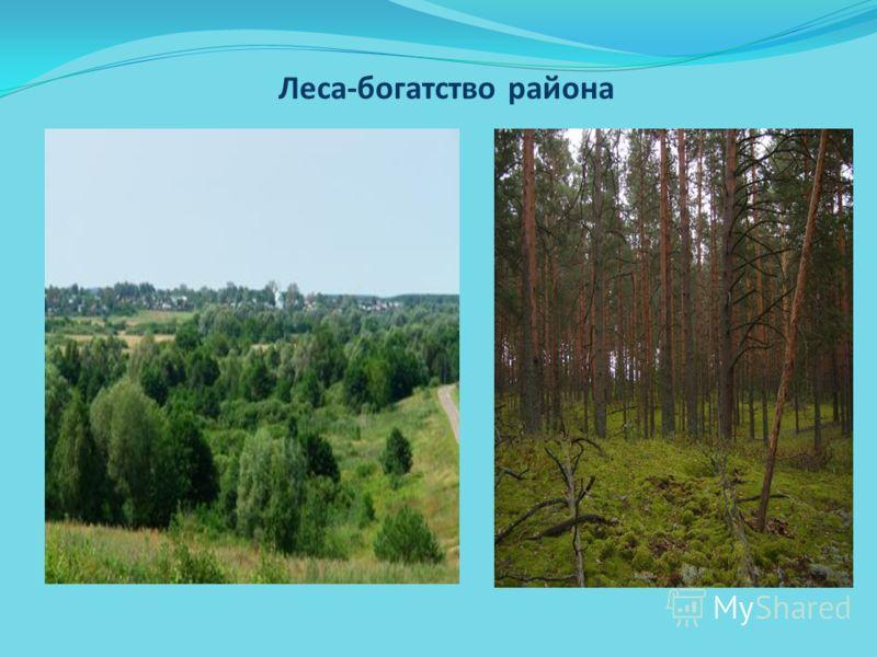 Леса-богатство района