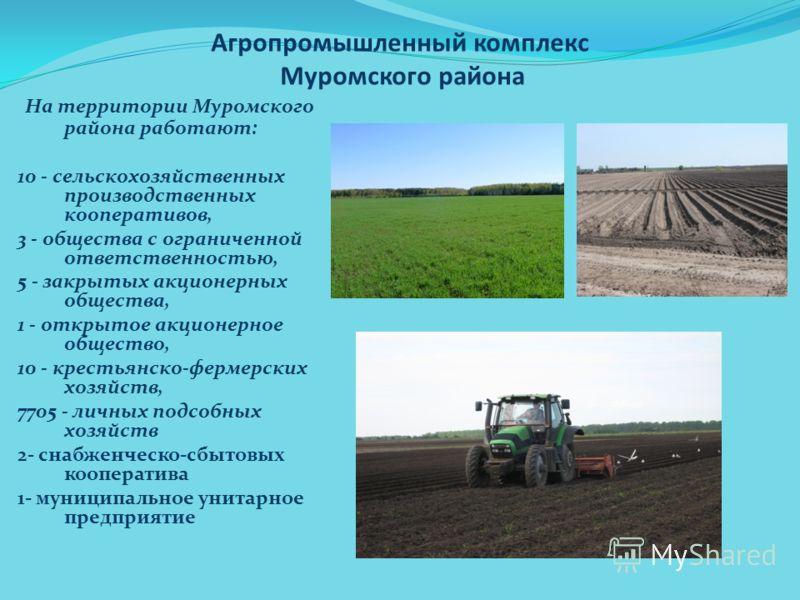 Агропромышленный комплекс Муромского района На территории Муромского района работают: 10 - сельскохозяйственных производственных кооперативов, 3 - общества с ограниченной ответственностью, 5 - закрытых акционерных общества, 1 - открытое акционерное о