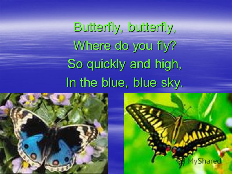 Butterfly, butterfly, Where do you fly? So quickly and high, In the blue, blue sky.