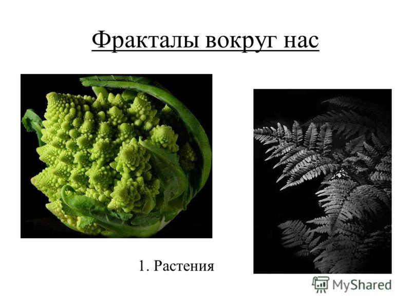 Фракталы вокруг нас 1. Растения