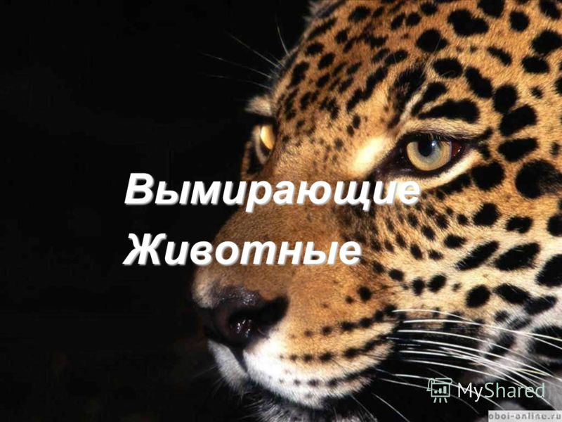 Вымирающие Вымирающие Животные Животные
