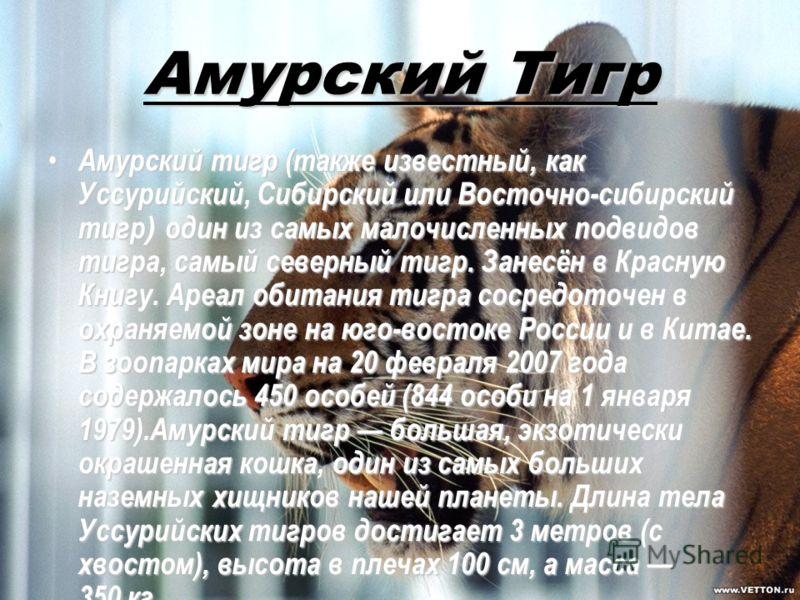 Амурский Тигр Амурский тигр (также известный, как Уссурийский, Сибирский или Восточно-сибирский тигр ) один из самых малочисленных подвидов тигра, самый северный тигр. Занесён в Красную Книгу. Ареал обитания тигра сосредоточен в охраняемой зоне на юг