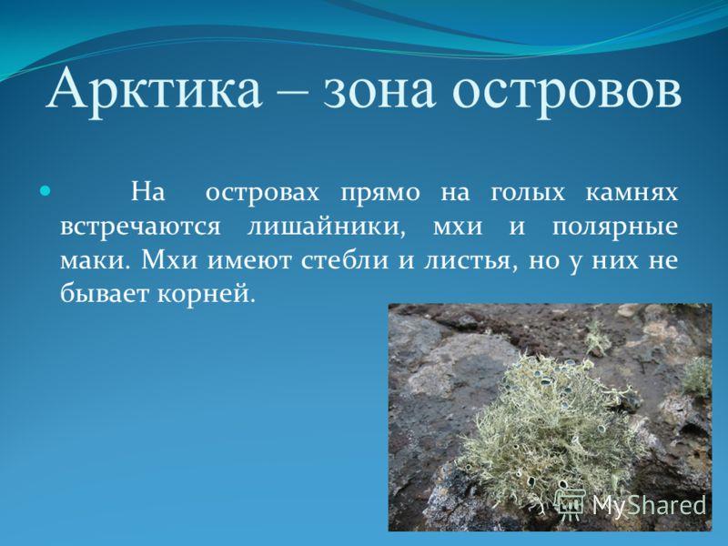 Арктика – зона островов На островах прямо на голых камнях встречаются лишайники, мхи и полярные маки. Мхи имеют стебли и листья, но у них не бывает корней.