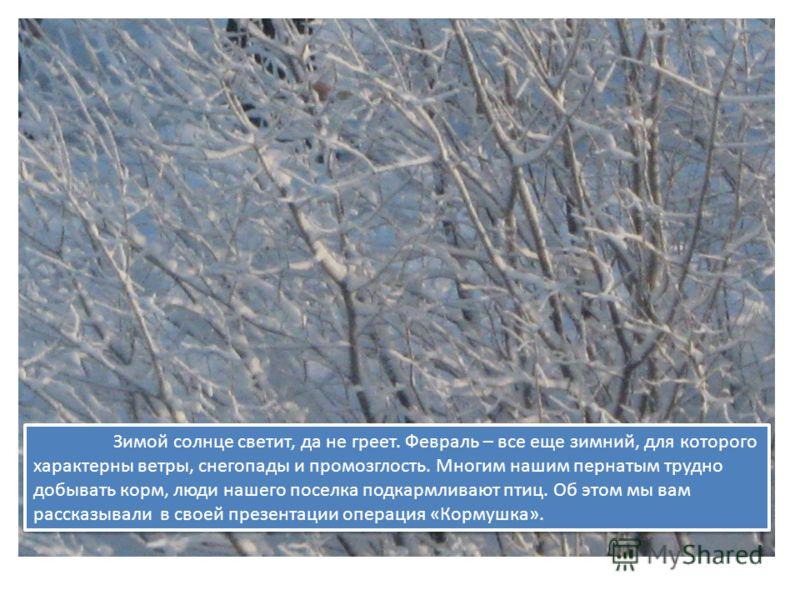 Зимой солнце светит, да не греет. Февраль – все еще зимний, для которого характерны ветры, снегопады и промозглость. Многим нашим пернатым трудно добывать корм, люди нашего поселка подкармливают птиц. Об этом мы вам рассказывали в своей презентации о