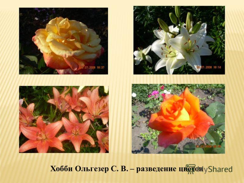 Хобби Ольгезер С. В. – разведение цветов
