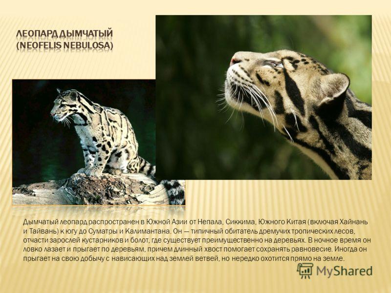Дымчатый леопард распространен в Южной Азии от Непала, Сиккима, Южного Китая (включая Хайнань и Тайвань) к югу до Суматры и Калимантана. Он типичный обитатель дремучих тропических лесов, отчасти зарослей кустарников и болот, где существует преимущест