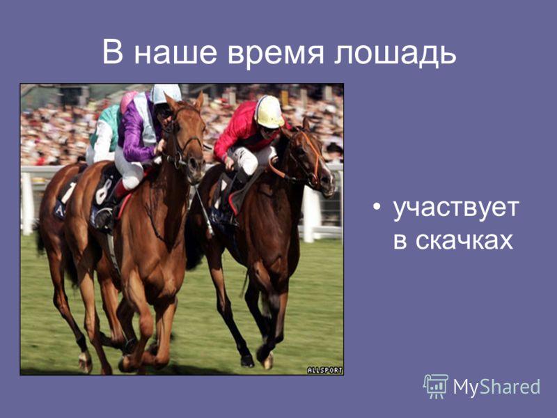 В наше время лошадь участвует в скачках