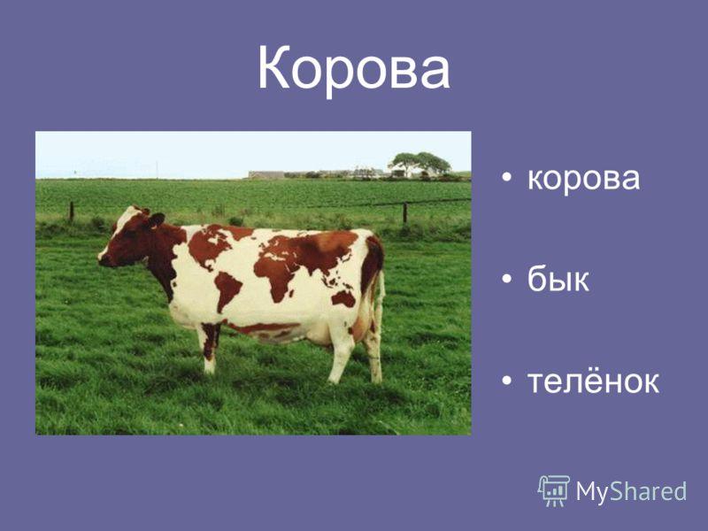 Корова корова бык телёнок
