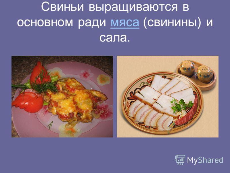 Свиньи выращиваются в основном ради мяса (свинины) и сала.мяса