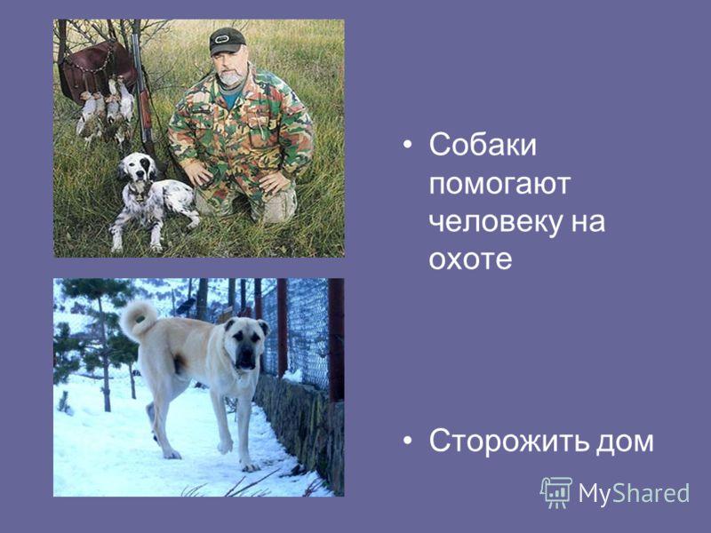 Собаки помогают человеку на охоте Сторожить дом