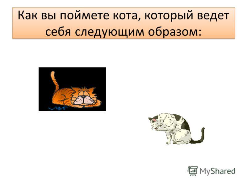 Как вы поймете кота, который ведет себя следующим образом: