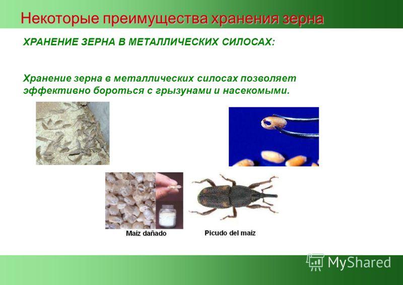 ХРАНЕНИЕ ЗЕРНА В МЕТАЛЛИЧЕСКИХ СИЛОСАХ: Хранение зерна в металлических силосах позволяет эффективно бороться с грызунами и насекомыми. Некоторые преимущества хранения зерна