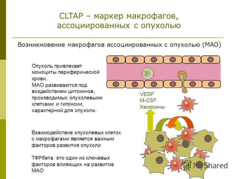 Опухоль привлекает моноциты периферической крови. МАО развиваются под воздействием цитокинов, производимых опухолевыми клетками и гипоксии, характерной для опухоли. Взаимодействие опухолевых клеток с макрофагами является важным факторов развития опух