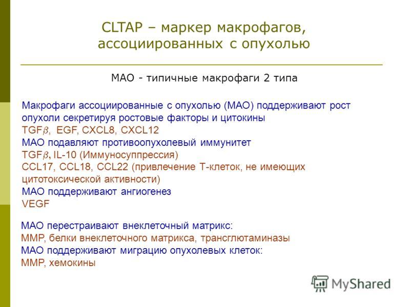 Макрофаги ассоциированные с опухолью (МАО) поддерживают рост опухоли секретируя ростовые факторы и цитокины TGF, EGF, CXCL8, CXCL12 МАО подавляют противоопухолевый иммунитет TGF IL-10 (Иммуносуппрессия) СCL17, CCL18, CCL22 (привлечение Т-клеток, не и
