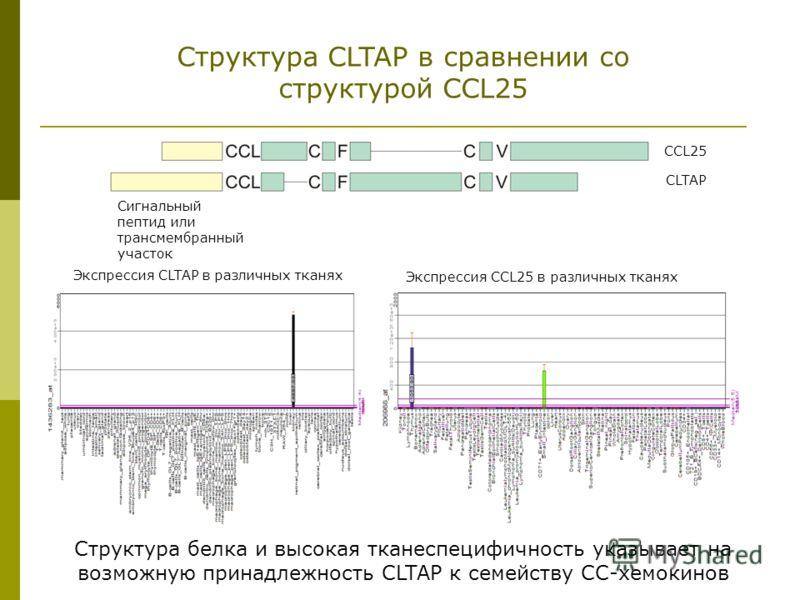 Структура CLTAP в сравнении со структурой CCL25 Сигнальный пептид или трансмембранный участок Экспрессия CCL25 в различных тканях CCL25 CLTAP Экспрессия CLTAP в различных тканях Структура белка и высокая тканеспецифичность указывает на возможную прин