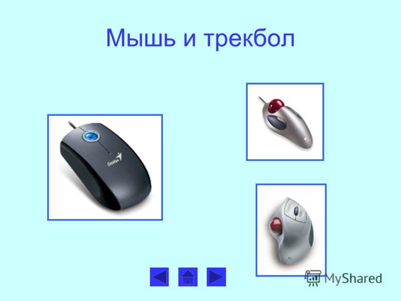 Мышь и трекбол