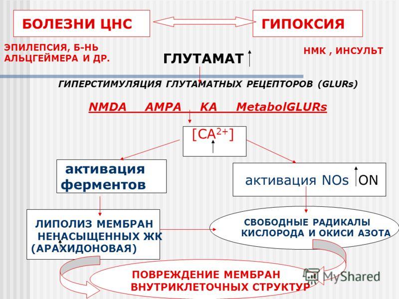БОЛЕЗНИ ЦНС ГИПОКСИЯ ЭПИЛЕПСИЯ, Б-НЬ АЛЬЦГЕЙМЕРА И ДР. ГЛУТАМАТ ГИПЕРСТИМУЛЯЦИЯ ГЛУТАМАТНЫХ РЕЦЕПТОРОВ (GLURs) NMDA AMPA KA MetabolGLURs [CA 2+ ] активация ферментов активация NOs ON ЛИПОЛИЗ МЕМБРАН НЕНАСЫЩЕННЫХ ЖК (АРАХИДОНОВАЯ) СВОБОДНЫЕ РАДИКАЛЫ К
