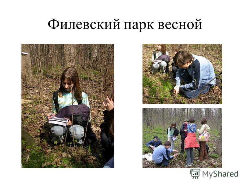 Филевский парк весной