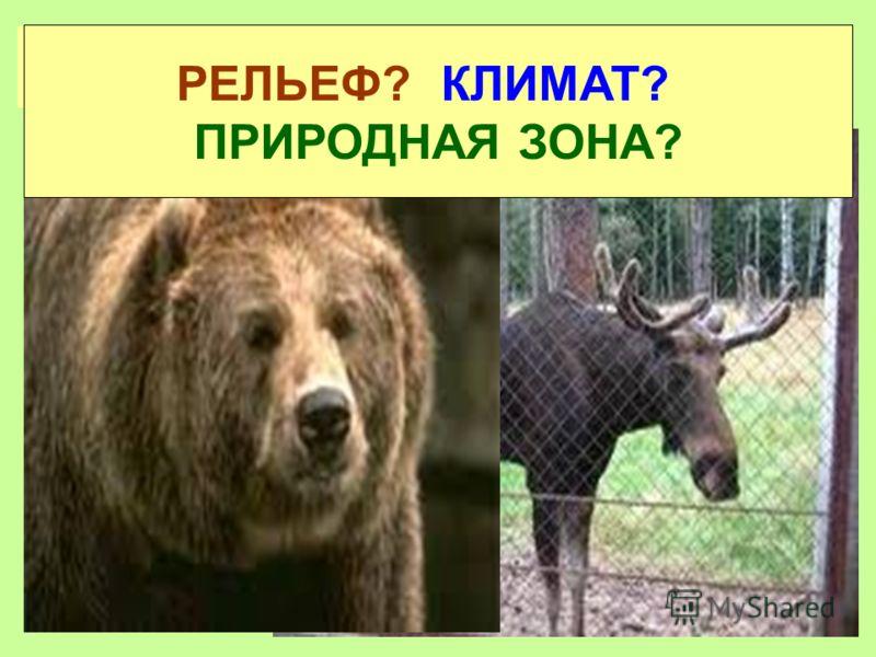Самые крупные животные Европы Лось, медведь РЕЛЬЕФ? КЛИМАТ? ПРИРОДНАЯ ЗОНА?