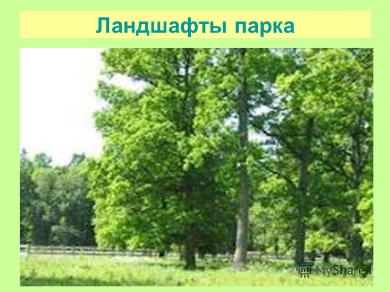 Ландшафты парка