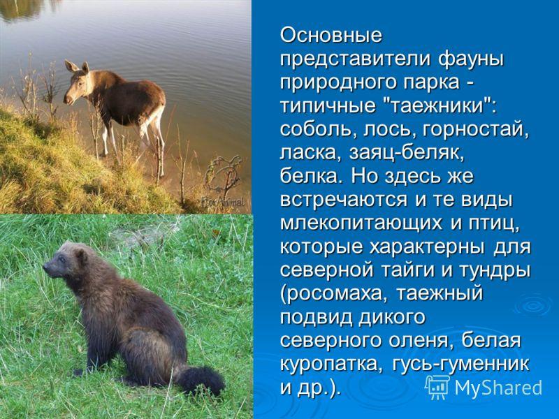 Основные представители фауны природного парка - типичные