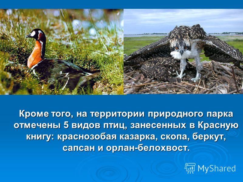 Кроме того, на территории природного парка отмечены 5 видов птиц, занесенных в Красную книгу: краснозобая казарка, скопа, беркут, сапсан и орлан-белохвост.