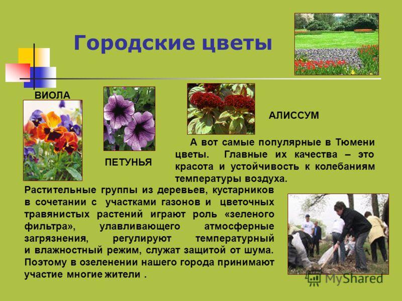Городские цветы А вот самые популярные в Тюмени цветы. Главные их качества – это красота и устойчивость к колебаниям температуры воздуха. Растительные группы из деревьев, кустарников в сочетании с участками газонов и цветочных травянистых растений иг