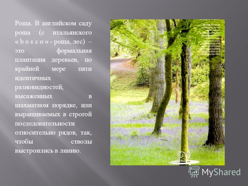 Роща. В английском саду роща (с итальянского « b o s c o » - роща, лес) – это формальная плантация деревьев, по крайней мере пяти идентичных разновидностей, высаженных в шахматном порядке, или выращиваемых в строгой последовательности относительно ря